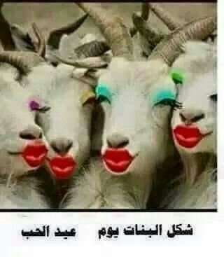 Pin By مالك الحب On صور مضحكة Very Funny Pictures Animals Goats Funny
