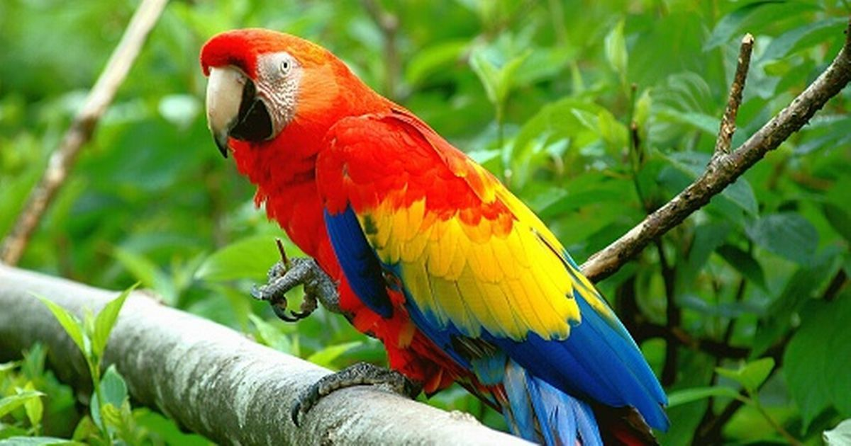How much does a parrot cost updated parrot price in 2020