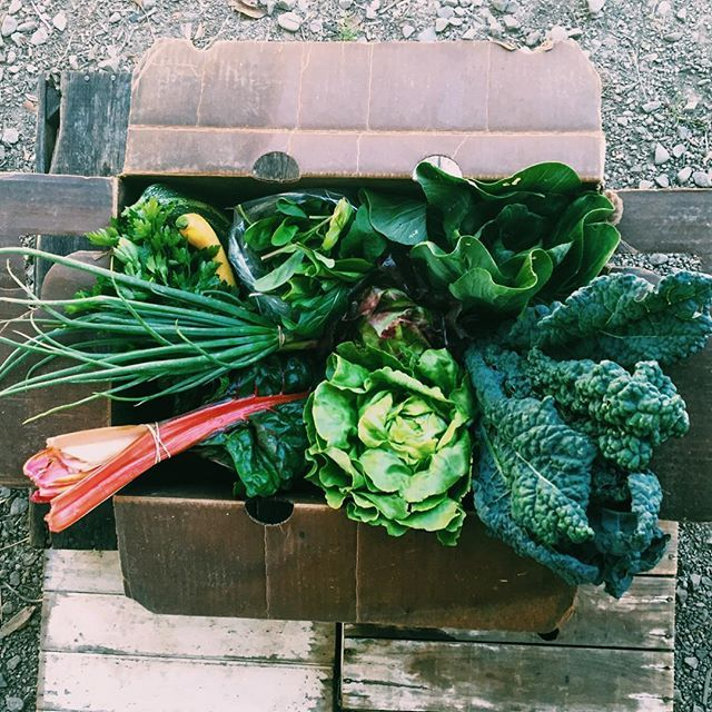 CSA boxes are coming at ya! We're pretty stoked on this first box.  #happyacrefarm #CSA #nopanicweorganic #farmlife #eastbay #sunolgrown #sunolagpark