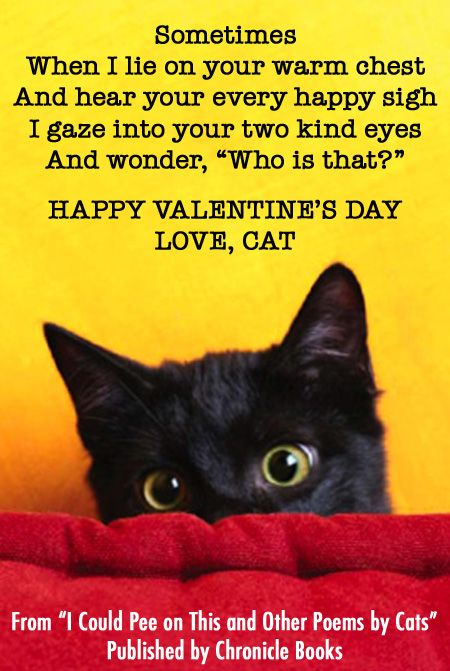 happy valentines day from cats - Cat Valentine Cards
