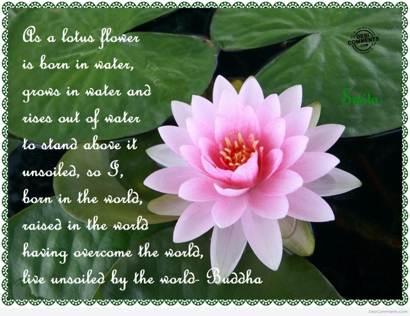 I Use The Lotus Flower As The Symbol On My Business Cards The Very