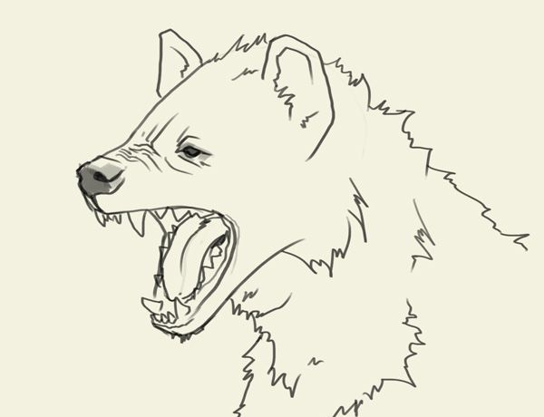 Hyena Head Drawing Jpg 600 460 With Images Animal Sketches