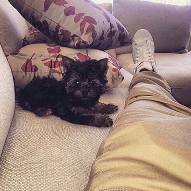 Image from http://www.justinbieberzone.com/wp-content/uploads/2015/04/justinbieber-privatejet-with-dogpuppy2-640x889.jpg.