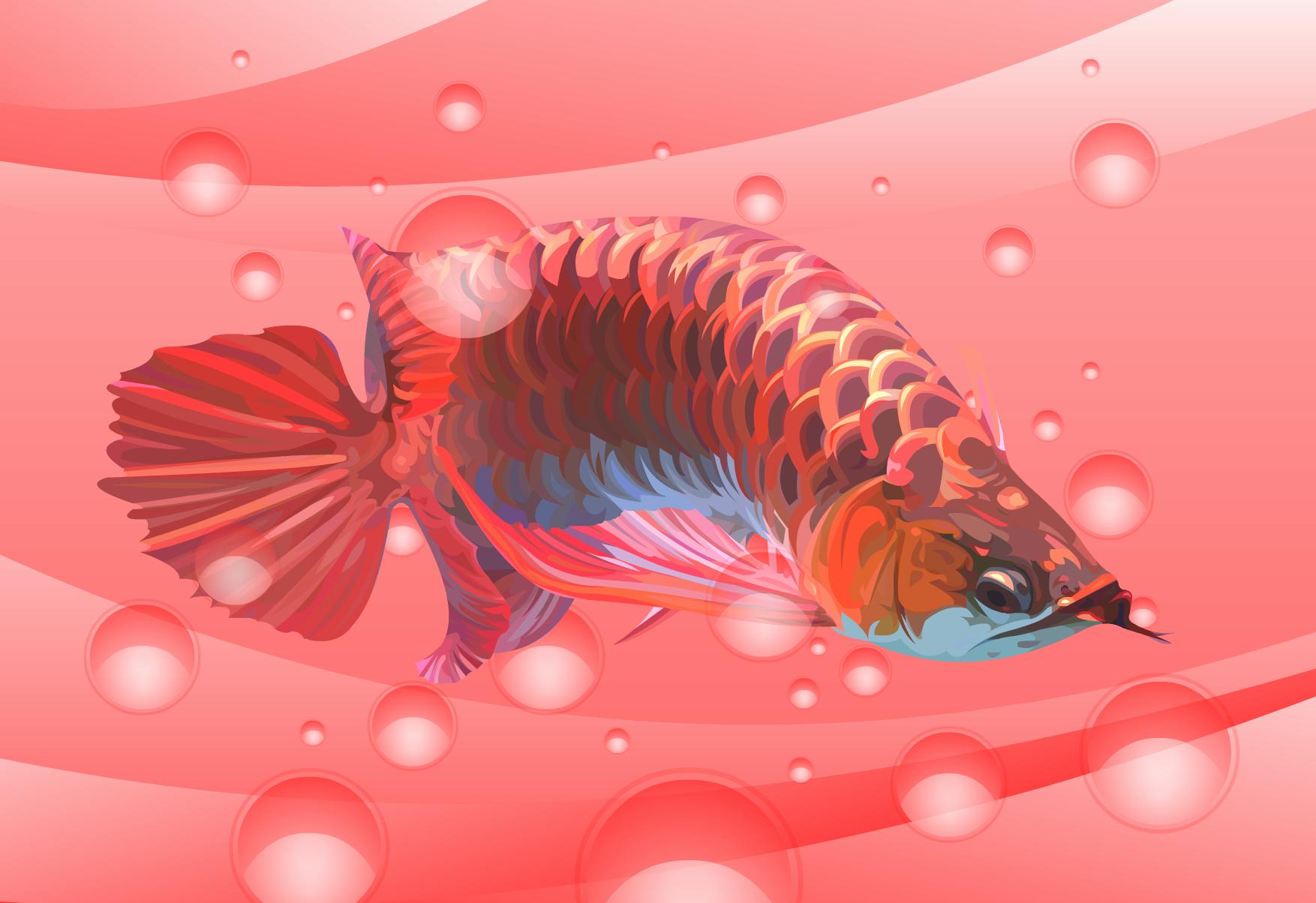 Red Arowana Vector 2 By Angga2110 On Deviantart Ikan Perhiasan