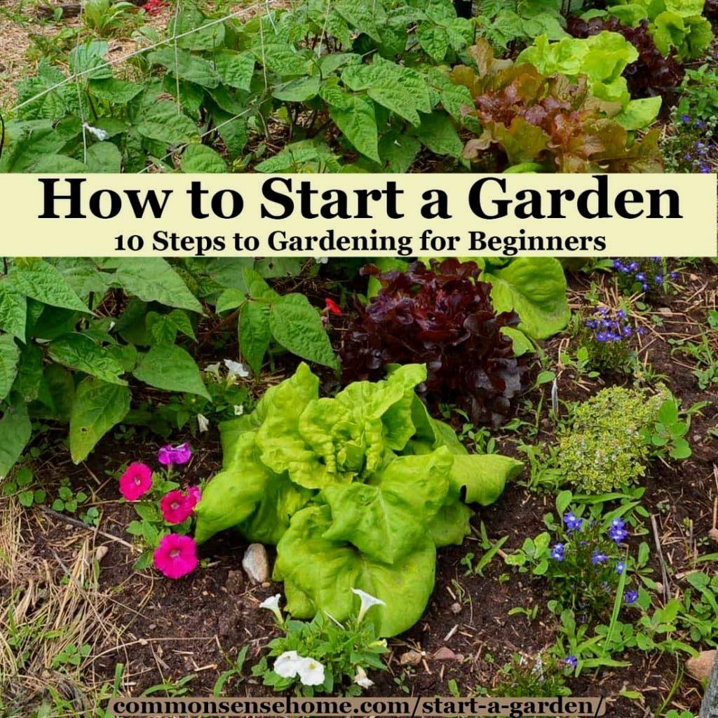 How To Make A Garden Starting A Garden Gardening For Beginners Starting A Vegetable Garden