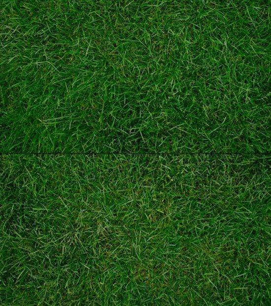 Free High Quality Tileable / Seamless Photoshop Patterns, Textures & Background Images | Grass ...