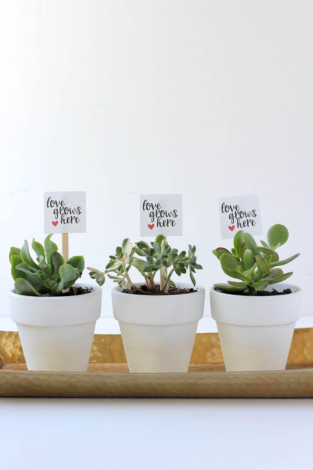 Valentine\'s Potted Plant and Free Printable | Free printable, Favors ...