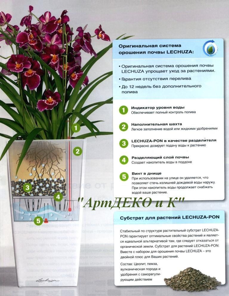 Инструкция как ухаживать за растениями