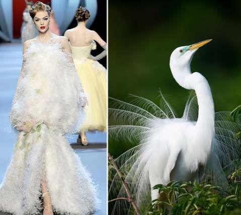 Wild Animal Runways Fashion Inspiration Design Animal Fashion Fashion