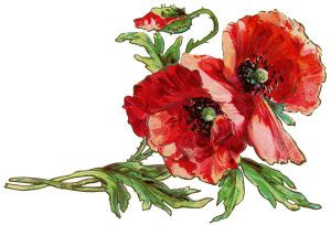 Free Vintage Postcard Graphic Poppy Clipart Old Fashioned Greeting