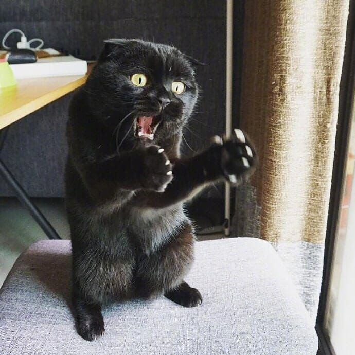 Hey Guys I Swear I Caught A Big Mouse Yesterday It Was This Big Lolsnaps Funny Animals Cat Memes Funny Animal Pictures