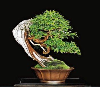 Bonsai Haus pin by roger hansen on rhbonsai bonsai bonsai and