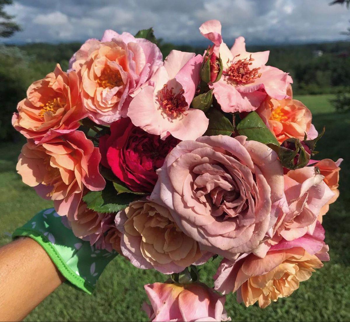 Organic Roses Near Me in 2020 Organic roses, Fresh