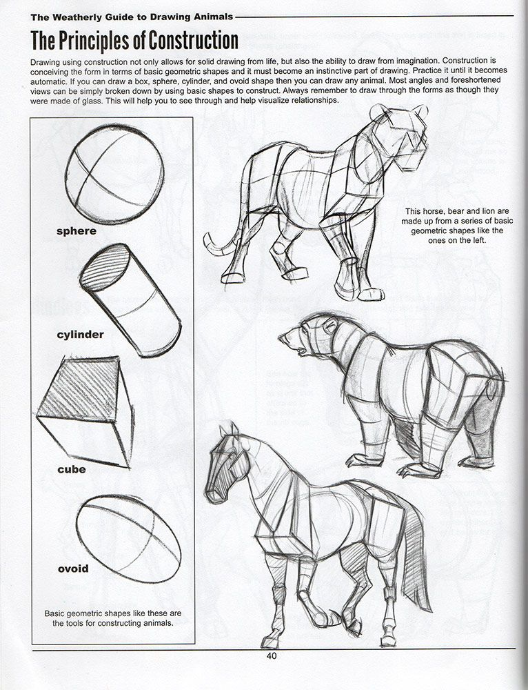 The Weatherly Guide To drawing Animals | Animal drawings ...