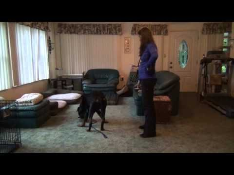 Severe Food Aggression & Resource Guarding - Before/After Dog Training - YouTube