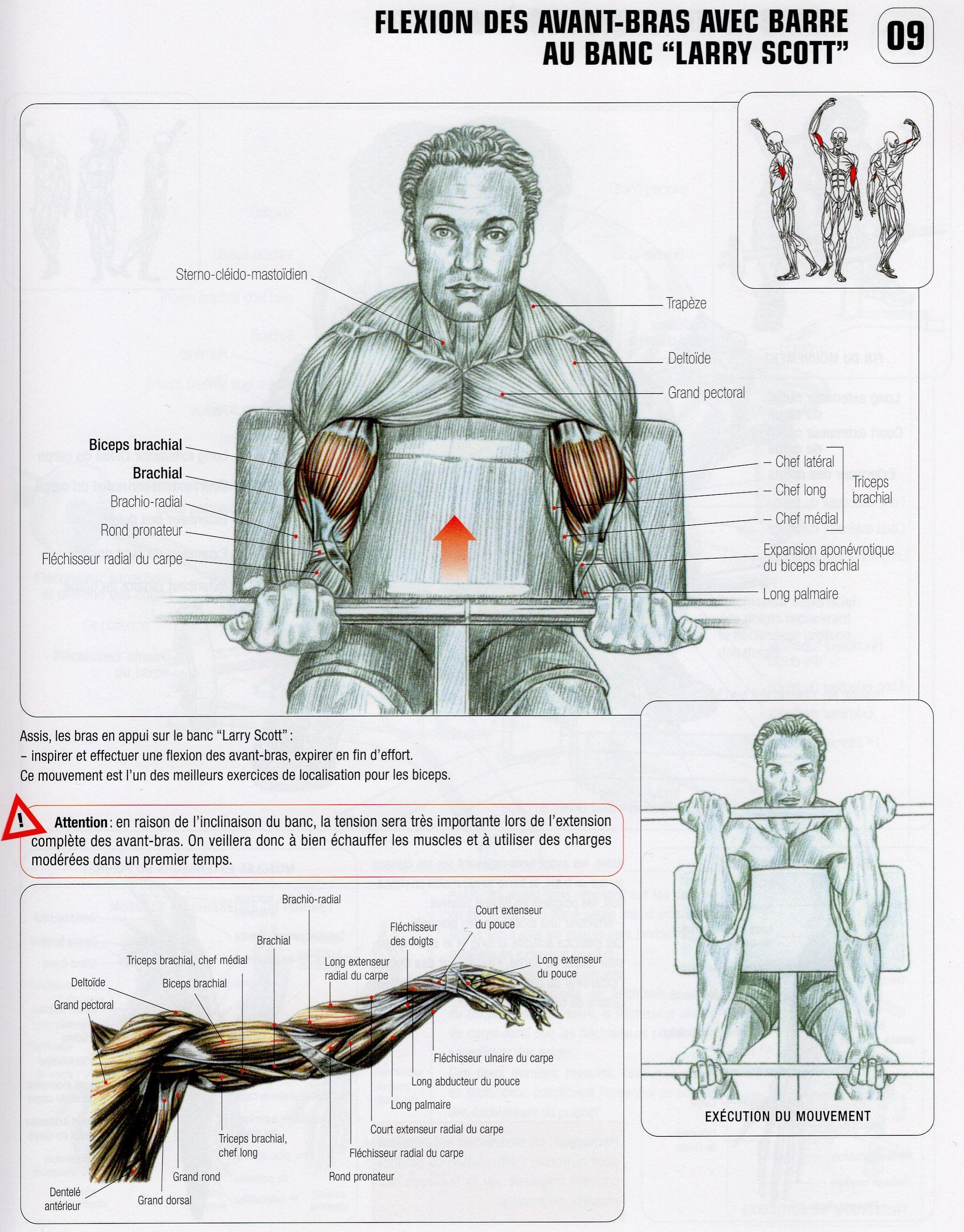 01 - Flexion des avant-bras avec barre au banc larry scott ...