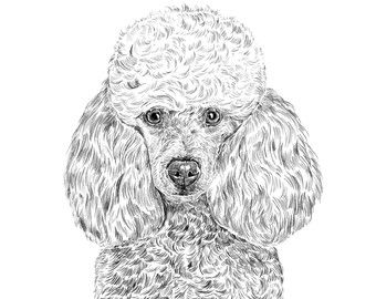 11x14 Poodle Print Poodle Drawing Poodle Dog Gifts