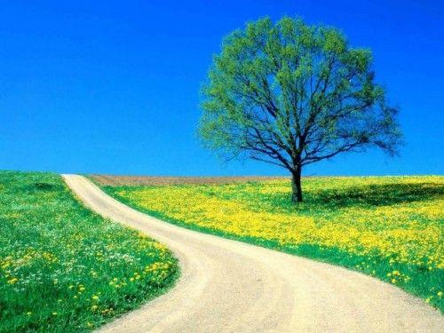 desktop gorgeous images free download