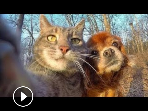 Funny Dogs Videos Try Not To Laugh Clean Funny Dog And