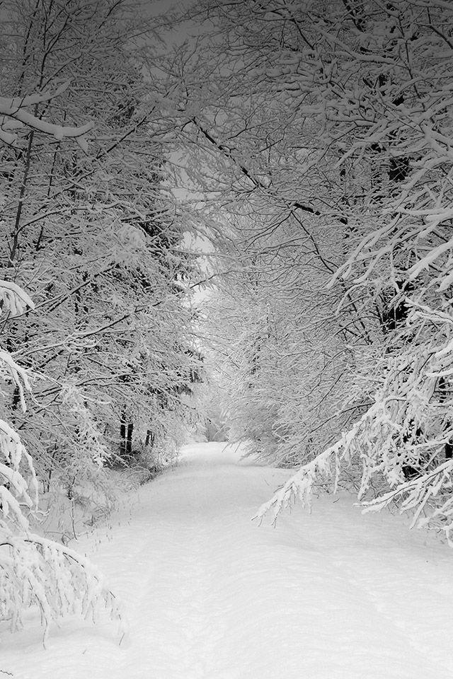 Freeios7 Winter All Over Freeios7 Com Winter Scenery Winter