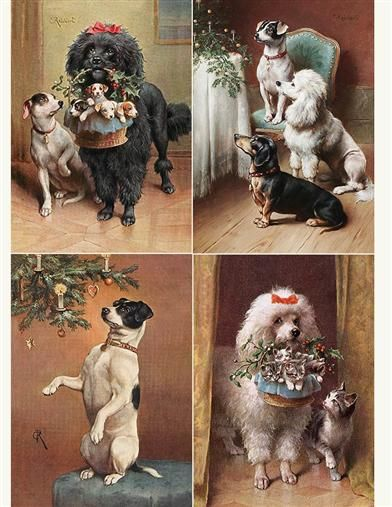 Reichert Dogs Pkg Of 12 Holiday Cards Dog Christmas Card