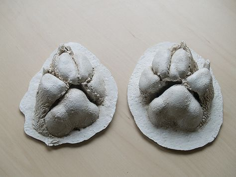 Creating a cast of pet paws. Puppy paw prints, Dog paw