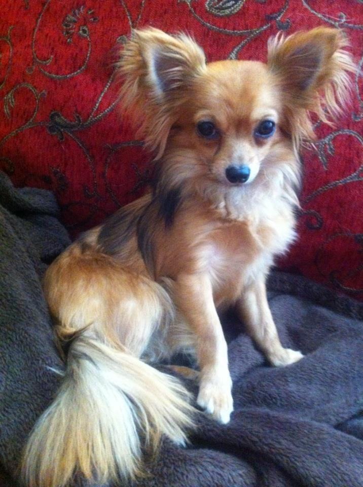 Susy Niedliche hunde, Lustige hunde und Süßeste haustiere