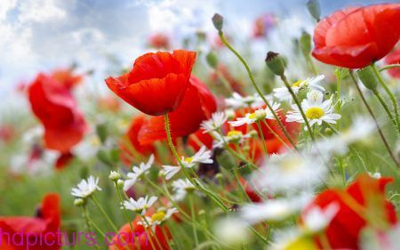 صور الربيع صور خلفيات الربيع صور فصل الربيع الطبيعة الجميلة و الخلابة Flower Wallpaper Beautiful Flowers Wallpapers Summer Flowers