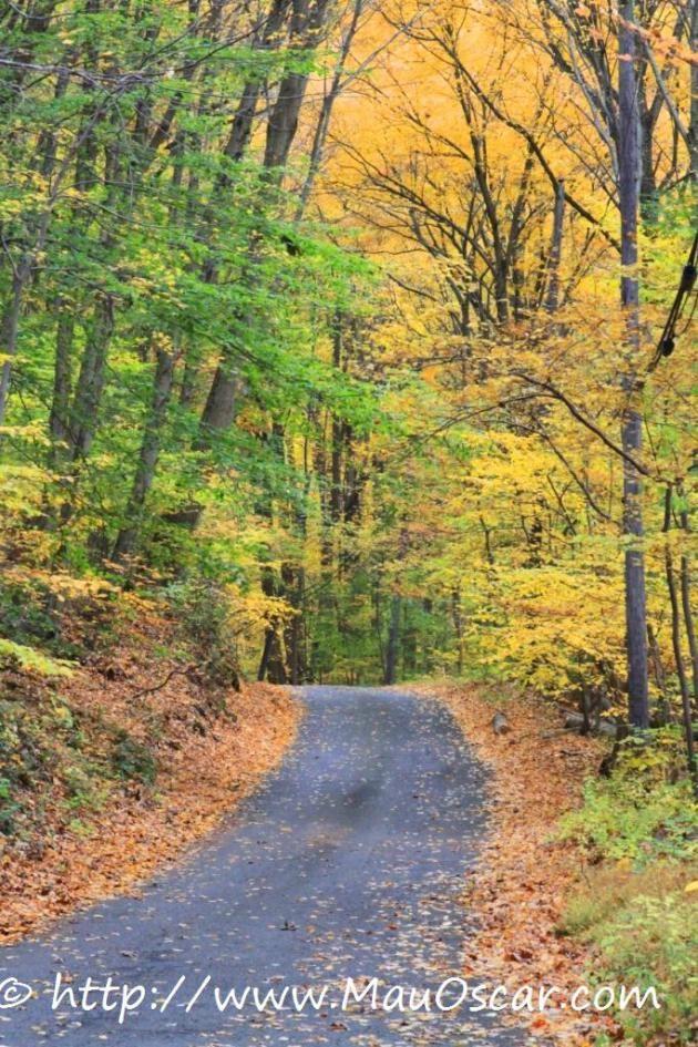Outono nos EUA - Brandywine Valley em Delaware  (18)
