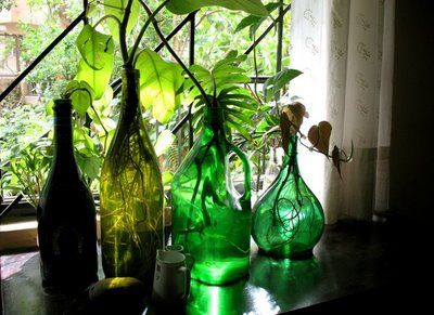 Rang Decor Interior Ideas Predominantly Indian March 2009 Using Colored Bottles Plant In Glass Plants In Bottles Colored Glass Bottles