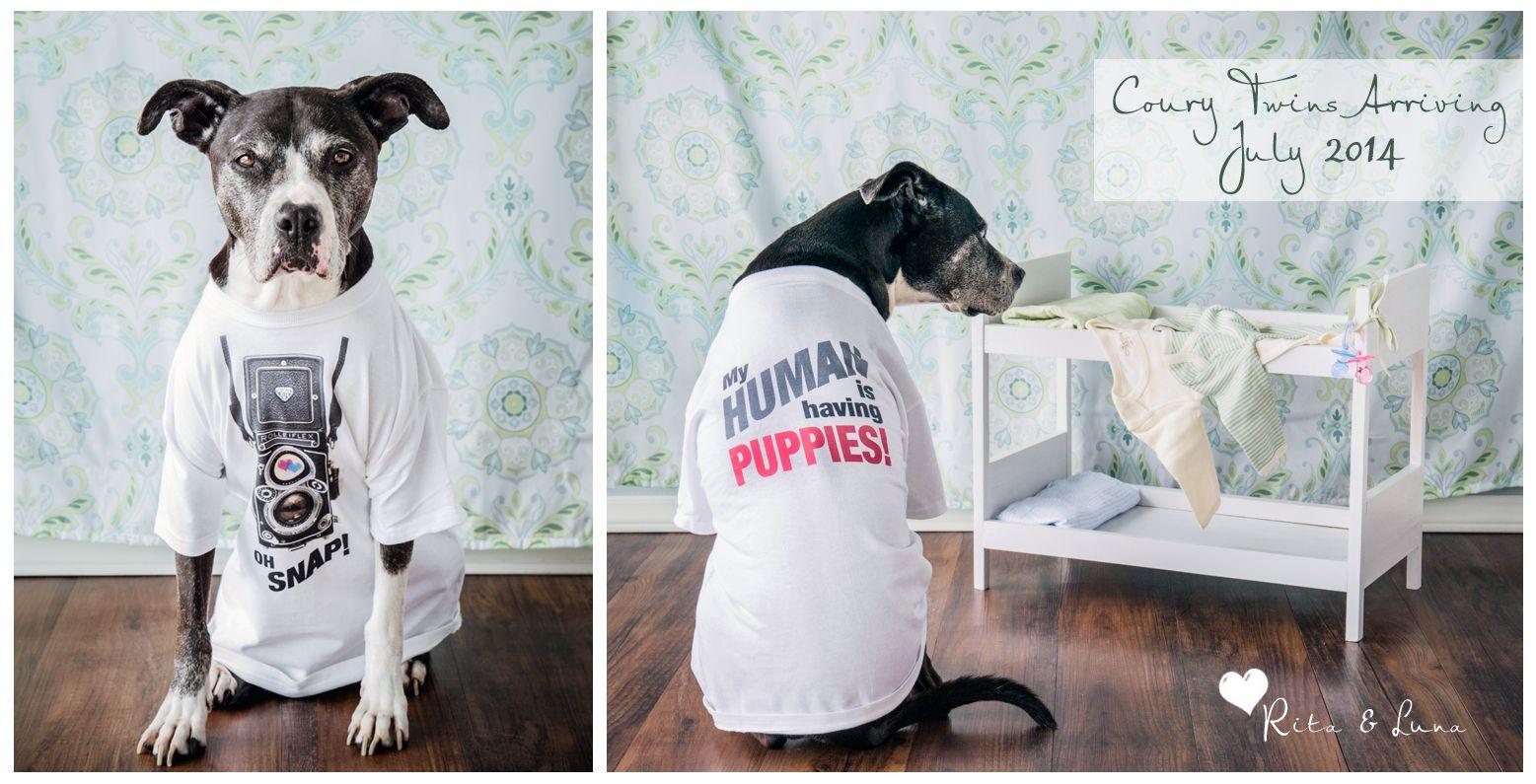 Twin pregnancy announcement dog cute Pinterest – Pinterest Baby Announcement