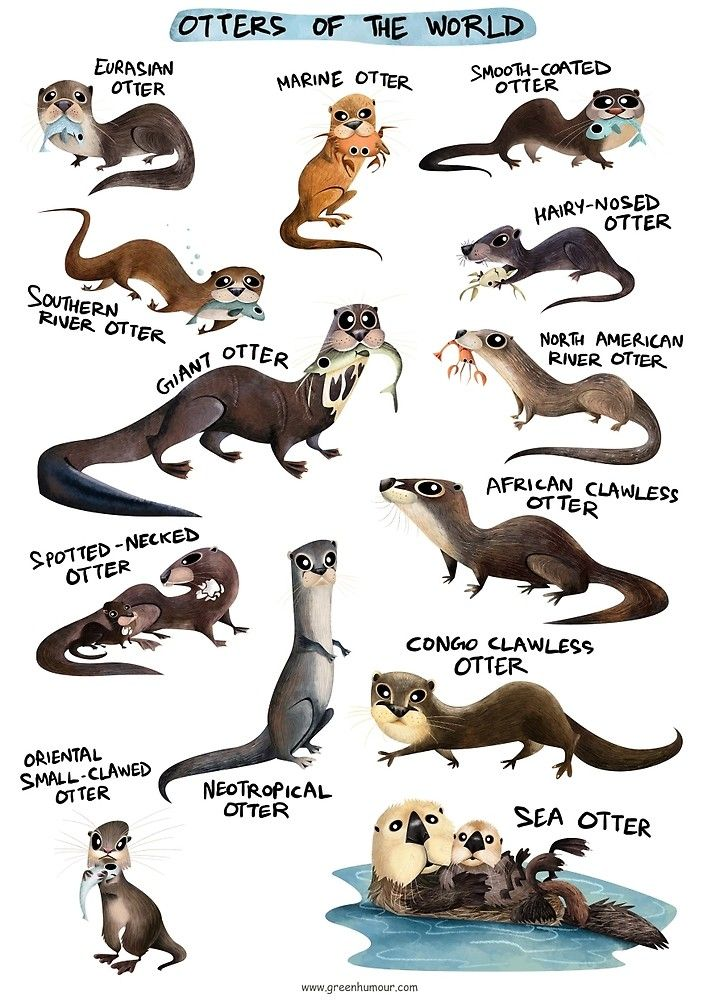 Otters of the World by rohanchak | Species ID Information / Field ...