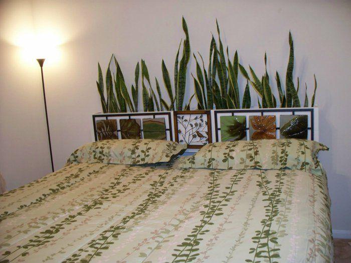 Zimmerpflanze für jedes Zimmer passend auswählen   Zimmerpflanzen ...
