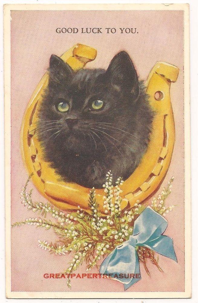 Lucky Black Cat Postcard No 5249 By Valentine Horseshoe White Heather Black Cat Art Cat Artwork Black Cat
