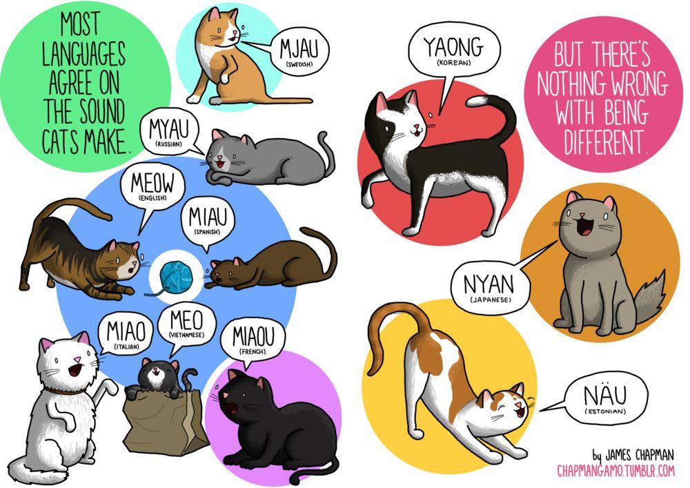 Onomatopeyas del sonido de los #gatos dependiendo de cada país ...