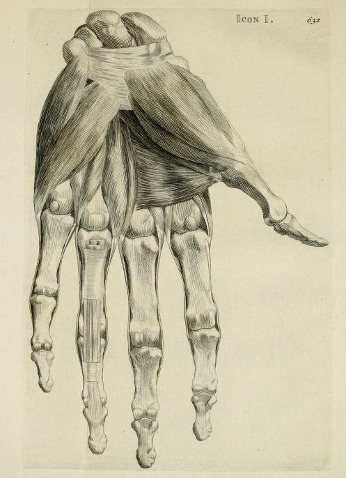 1734 - Bernardi Siegfried Albini, anatomes & chirurgiae in academia ...