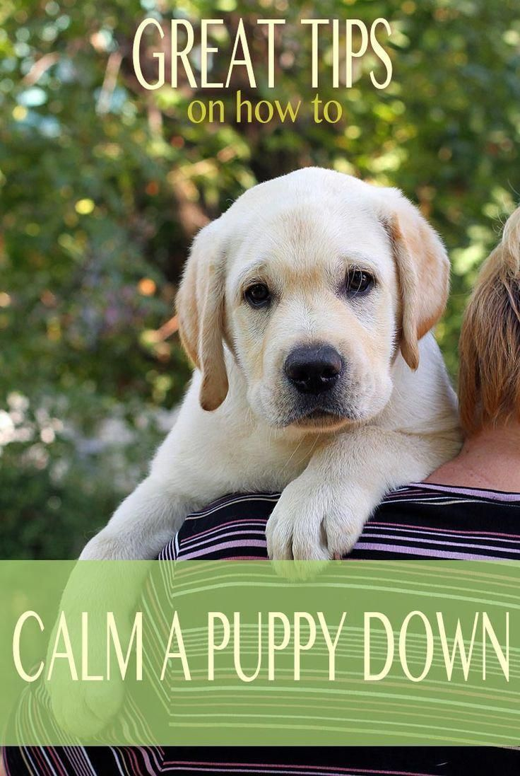 How to calm a puppy down from biting and reduce over