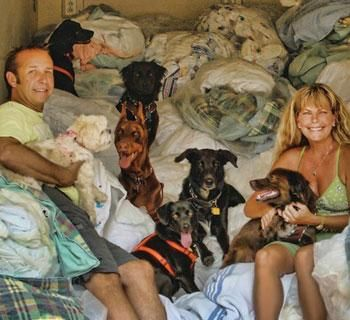 Green Witchery Reuse Donate Old Blankets Towels Linens To Local Animal Shelters And Independent Res Animal Shelter Witch Cottage Animal Rescue