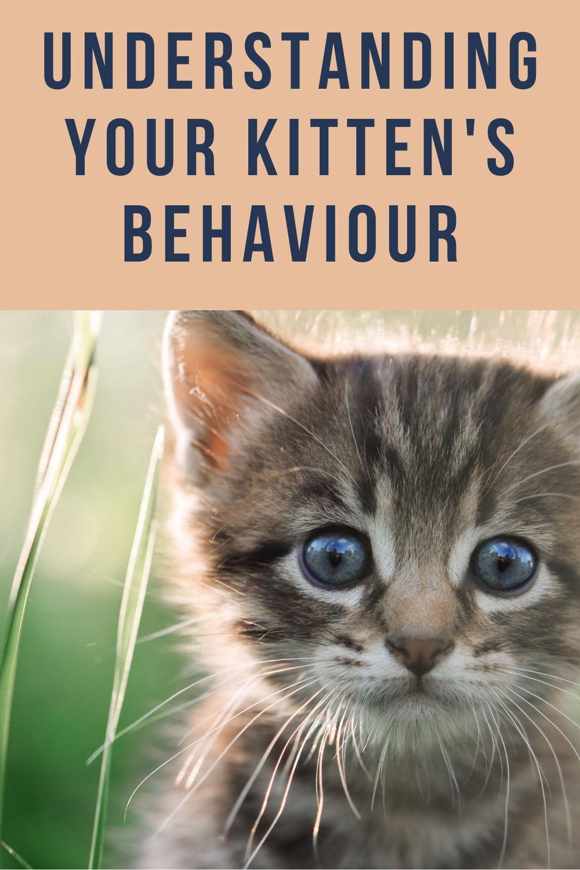 The First Life Cycle Of A Cat 0 6 Months Kitten Kritter Kommunity In 2020 Kittens Cutest Sleeping Kitten Newborn Kittens