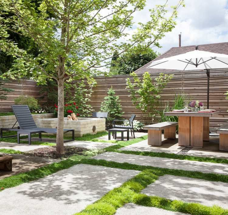 Sternmoos zwischen große Betonplatten im Garten Green - pflanzen topfen kubeln terrasse