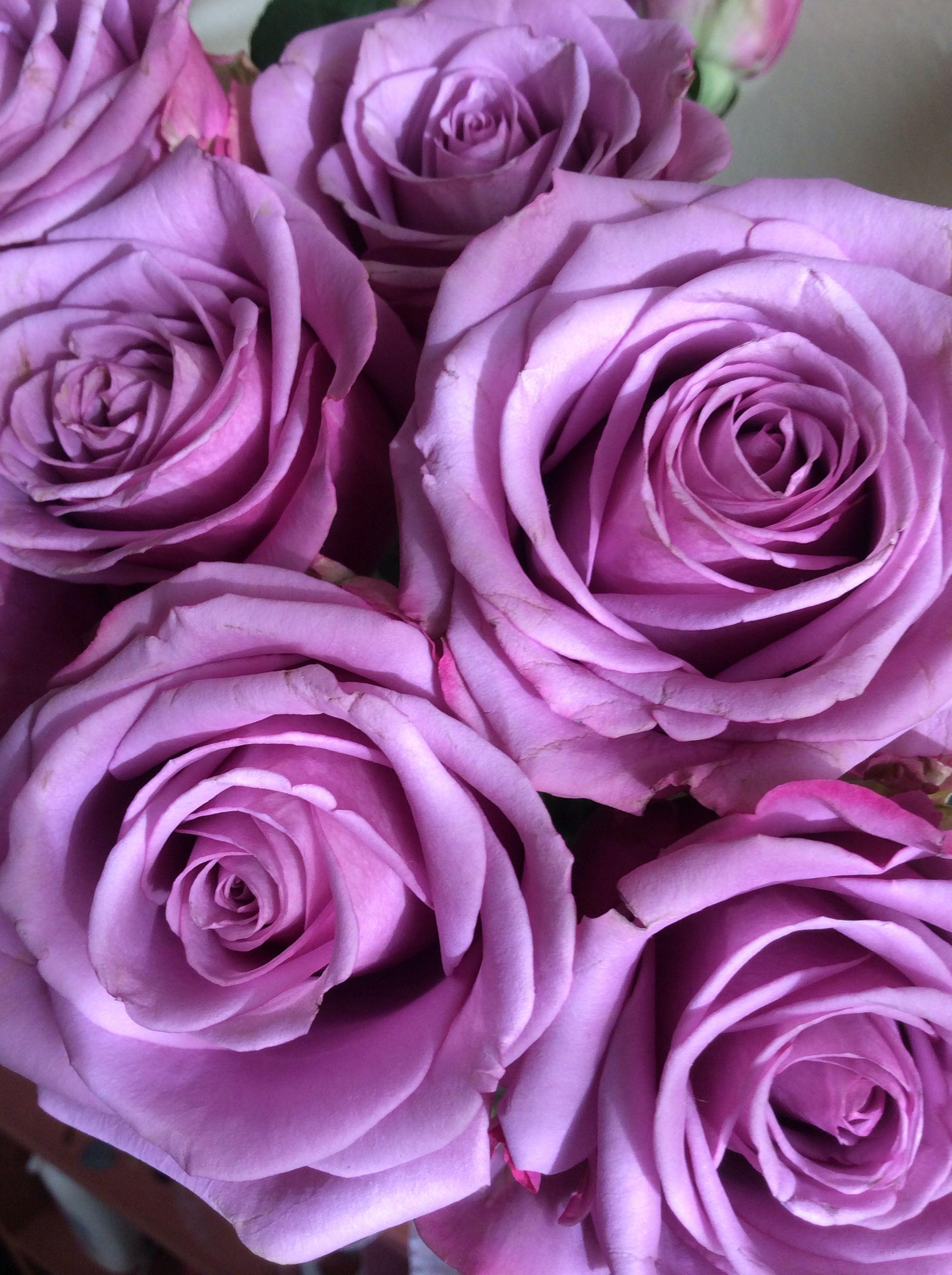 Оттенки розового цвета названия с фото дома