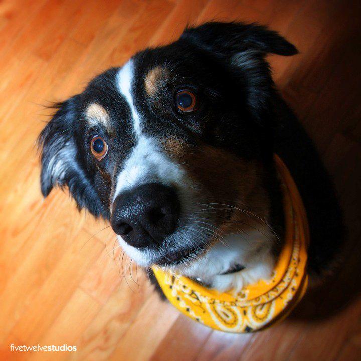 Chance - www.facebook.com/512studios #pets #dog