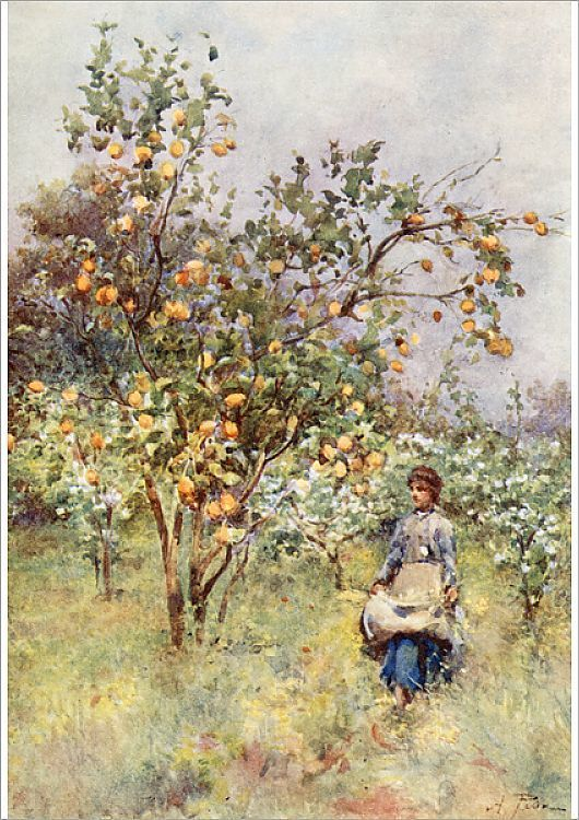 Poster Print-Lemon trees in Sicily, Italy-16