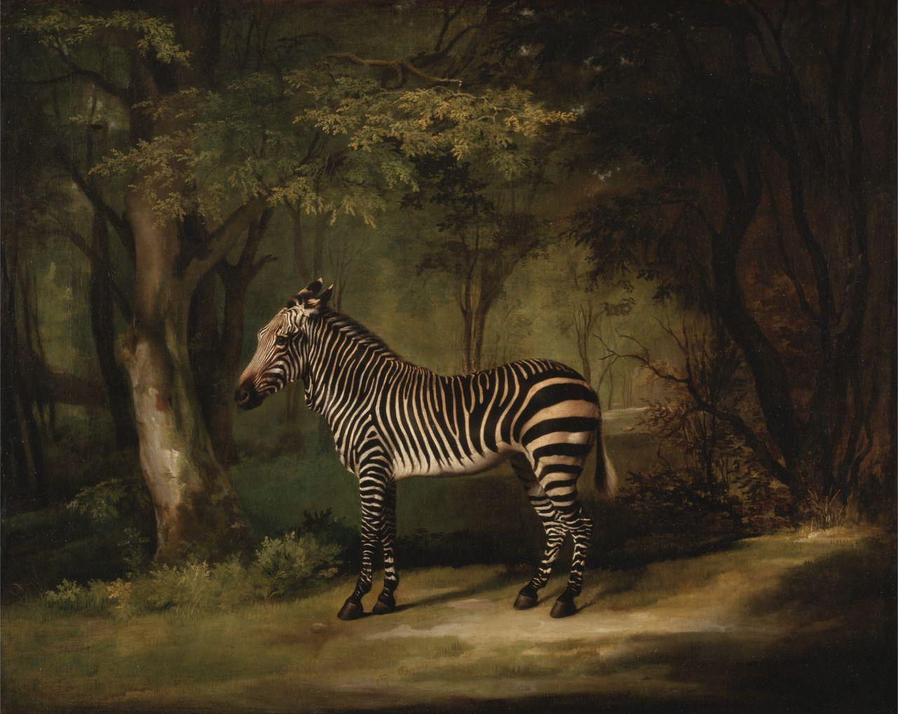 Zebra, Stubbs, 1763 (With images) Zebra art