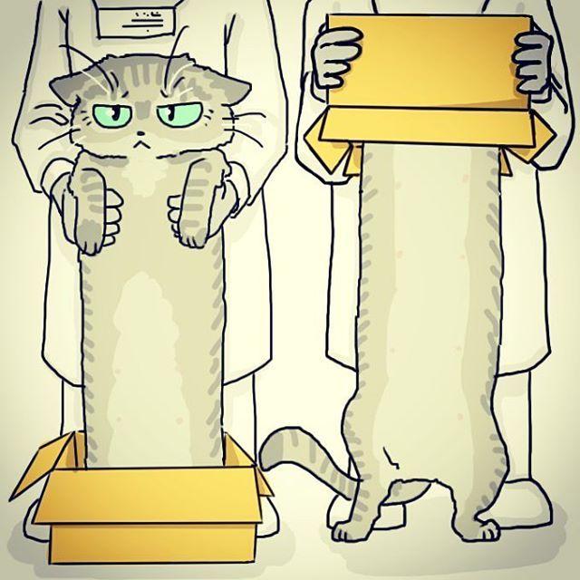#dailydrawing #drawing #catdrawing #cat #dailydrawings #drawings #catdrawings #cats #냥그림 #냥스타그램 #캣스타그램 #catstagram #neko #고양이 #猫 #ねこ #gato #고양이그림 #instacat #하루한장#취미로고양이그리는아줌마  an experiment.