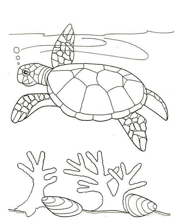 Turtle Swim Near Seaweed Coloring Page SkyHawk Swimming