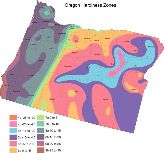 ed1309416e163ee7004b959419a385d4 - What Zone Is Portland Oregon For Gardening