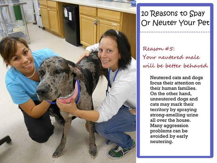 Reason 5 To Spay Neuter Dogs Animals Cute Animals