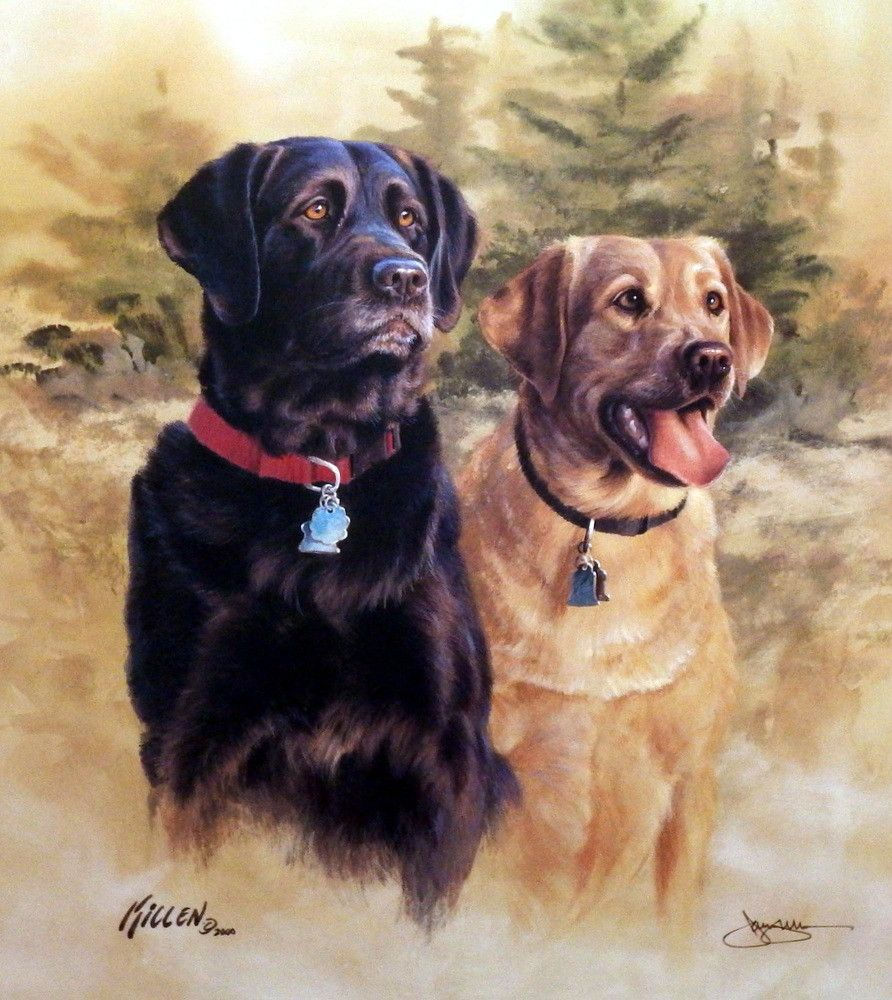 Killen A Good Pair Black and Yellow Labradors Signed   Labrador ...