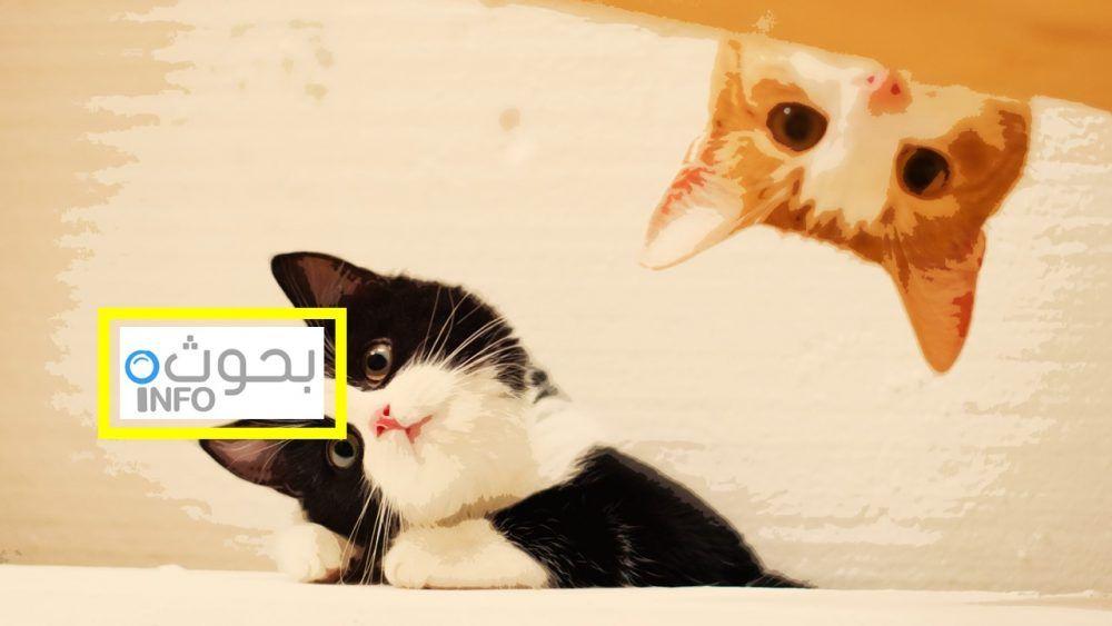 تربية القطط نصائح هامة لكل من يود تربية قطة بالمنزل Cats Animals